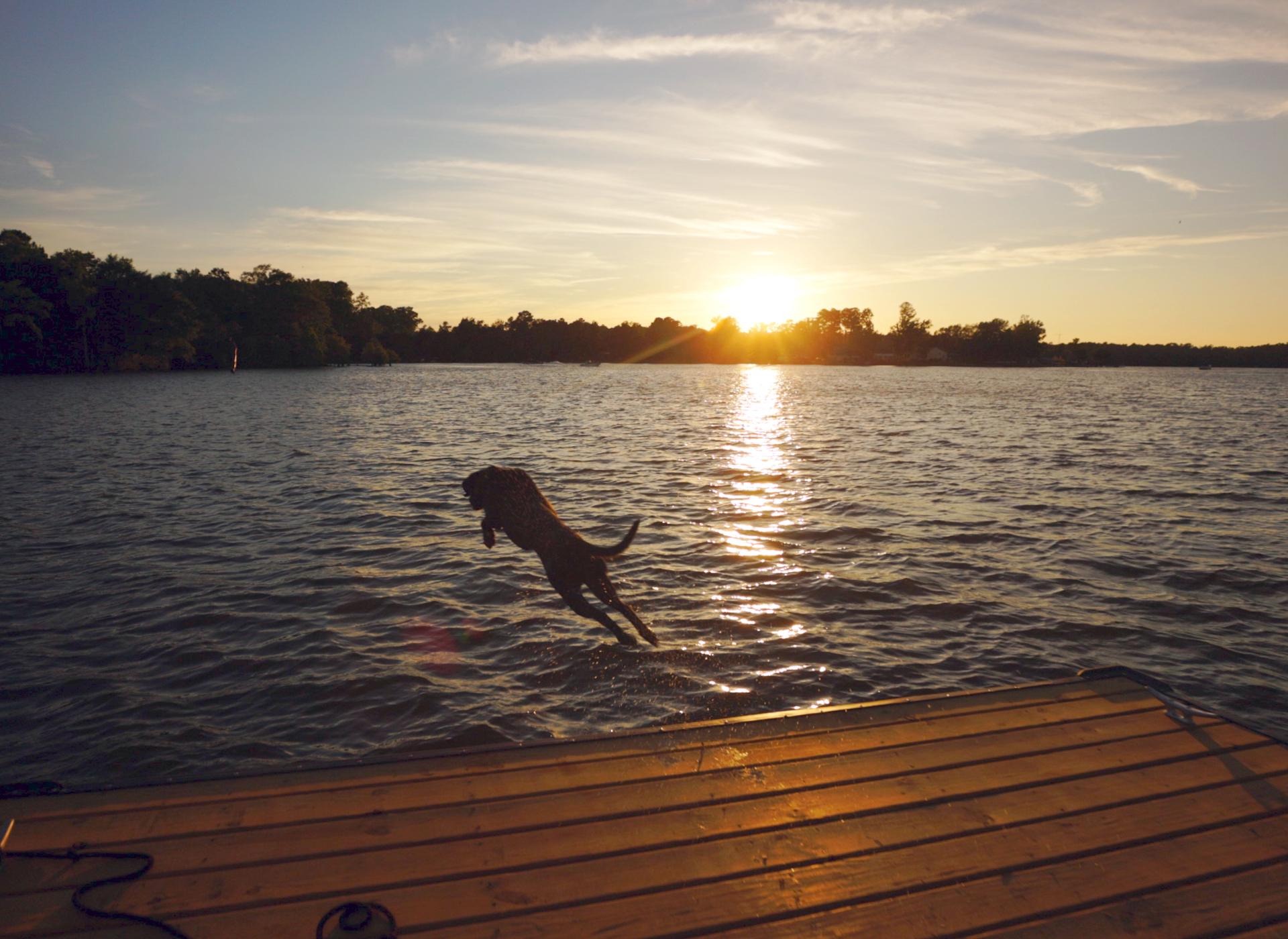 Life on Lake Murray     Swimming